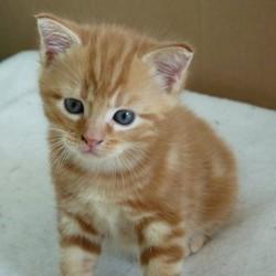 Mizou, chaton
