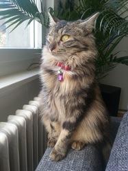 Mocca, chat Gouttière