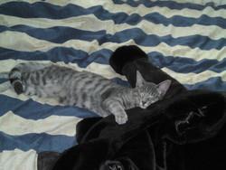 Moébius, chat