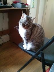 Mogwai, chat Gouttière