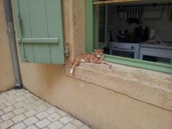 Moisette, chat