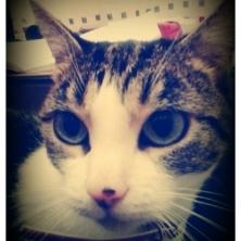 Moissy, chat Gouttière