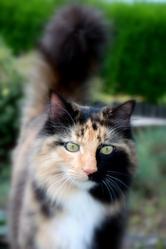 Moka, chat Gouttière