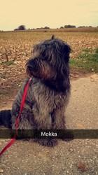 Mokka, chien