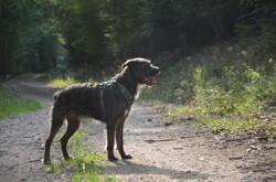Molko, chien