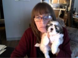 Molly, chien Shih Tzu