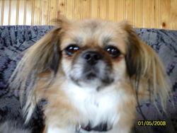 Molly, chien