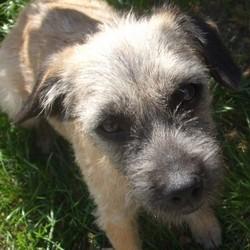 Monk, chien