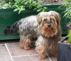 Monsieur Babine, chien