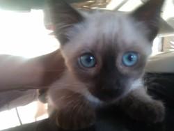 Monsieur Mackey , chat Gouttière