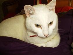 Monsieur Tah, chat Gouttière