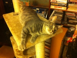 Moonzo, chat Gouttière