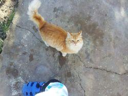 Morjana, chat