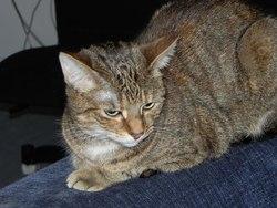Morphée, chat