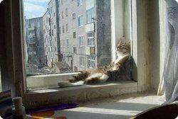 Mosaique, chat