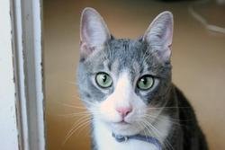 Mosby, chat Gouttière