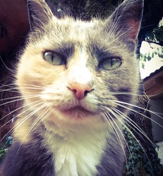 Mou-Moun, chat