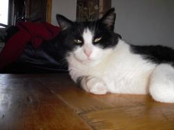 Mouche, chat Gouttière
