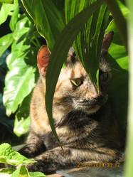 Mouchka, chat Gouttière
