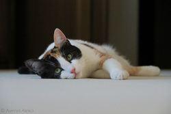 Mouchou, chat Gouttière