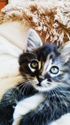 Mouffle, chat Gouttière