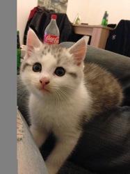 Mougli, chat Gouttière