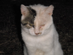 Mouglie, chat Gouttière