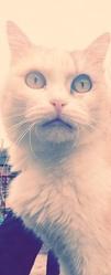 Mouillette, chat Gouttière