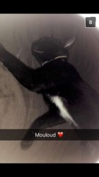 Mouloud, chat Gouttière