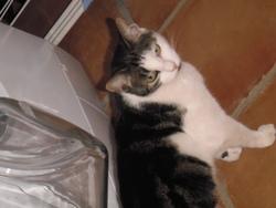 Mouchette, chat Gouttière