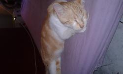 Moumoune, chat Gouttière