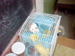 Moumoune, rongeur Hamster