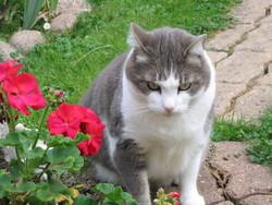 Moumousse, chat