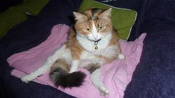 Moumoutte, chat Gouttière