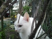 Moune, chat Gouttière