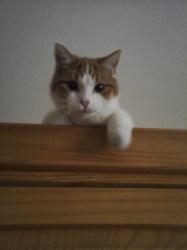 Moursik, chat Gouttière
