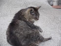 Mouss, chat Gouttière
