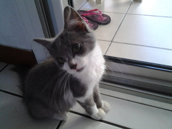 Mousseline, chat Gouttière