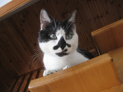 Moustache, chat Gouttière