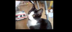 Moustache, chat Gouttière