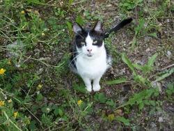 Moustik, chat Gouttière