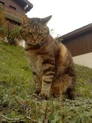 Moustilou, chat