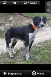 Moustique, chien Border Collie