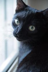 Mowgli, chat