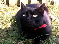 Mowgli, chat Gouttière
