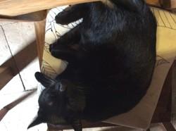 Mowglie, chat