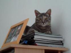 Mozana, chat Gouttière