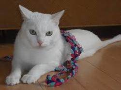 Mr Lucien , chat Gouttière