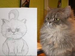 Mr Mousse, chat Gouttière