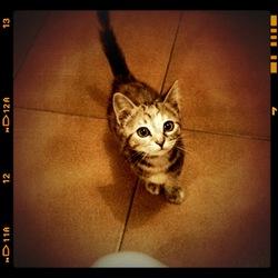 Mulan , chat Gouttière